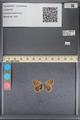 http://mczbase.mcz.harvard.edu/specimen_images/ent-lepidoptera/images/2014_01_07/IMG_152649.JPG