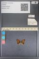 http://mczbase.mcz.harvard.edu/specimen_images/ent-lepidoptera/images/2014_01_08/IMG_152673.JPG