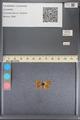 http://mczbase.mcz.harvard.edu/specimen_images/ent-lepidoptera/images/2014_01_08/IMG_152676.JPG
