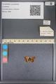 http://mczbase.mcz.harvard.edu/specimen_images/ent-lepidoptera/images/2014_01_08/IMG_152678.JPG