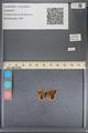 http://mczbase.mcz.harvard.edu/specimen_images/ent-lepidoptera/images/2014_01_08/IMG_152680.JPG