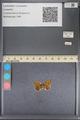 http://mczbase.mcz.harvard.edu/specimen_images/ent-lepidoptera/images/2014_01_08/IMG_152681.JPG