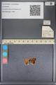 http://mczbase.mcz.harvard.edu/specimen_images/ent-lepidoptera/images/2014_01_08/IMG_152683.JPG