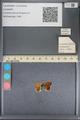 http://mczbase.mcz.harvard.edu/specimen_images/ent-lepidoptera/images/2014_01_08/IMG_152684.JPG