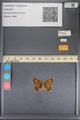 http://mczbase.mcz.harvard.edu/specimen_images/ent-lepidoptera/images/2014_01_08/IMG_152686.JPG