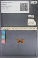 http://mczbase.mcz.harvard.edu/specimen_images/ent-lepidoptera/images/2014_01_08/IMG_152687.JPG