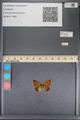 http://mczbase.mcz.harvard.edu/specimen_images/ent-lepidoptera/images/2014_01_08/IMG_152688.JPG