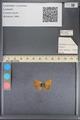 http://mczbase.mcz.harvard.edu/specimen_images/ent-lepidoptera/images/2014_01_08/IMG_152691.JPG