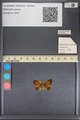 http://mczbase.mcz.harvard.edu/specimen_images/ent-lepidoptera/images/2014_01_08/IMG_152693.JPG