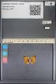 http://mczbase.mcz.harvard.edu/specimen_images/ent-lepidoptera/images/2014_01_08/IMG_152694.JPG