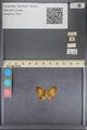 http://mczbase.mcz.harvard.edu/specimen_images/ent-lepidoptera/images/2014_01_08/IMG_152695.JPG