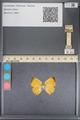 http://mczbase.mcz.harvard.edu/specimen_images/ent-lepidoptera/images/2014_01_08/IMG_152709.JPG