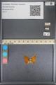 http://mczbase.mcz.harvard.edu/specimen_images/ent-lepidoptera/images/2014_01_08/IMG_152742.JPG