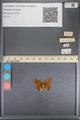 http://mczbase.mcz.harvard.edu/specimen_images/ent-lepidoptera/images/2014_01_08/IMG_152744.JPG