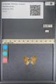 http://mczbase.mcz.harvard.edu/specimen_images/ent-lepidoptera/images/2014_01_08/IMG_152746.JPG