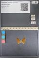 http://mczbase.mcz.harvard.edu/specimen_images/ent-lepidoptera/images/2014_01_08/IMG_152749.JPG