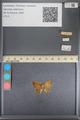 http://mczbase.mcz.harvard.edu/specimen_images/ent-lepidoptera/images/2014_01_08/IMG_152755.JPG