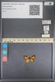 http://mczbase.mcz.harvard.edu/specimen_images/ent-lepidoptera/images/2014_01_08/IMG_152758.JPG