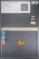 http://mczbase.mcz.harvard.edu/specimen_images/ent-lepidoptera/images/2014_01_08/IMG_152759.JPG