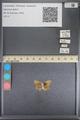 http://mczbase.mcz.harvard.edu/specimen_images/ent-lepidoptera/images/2014_01_08/IMG_152761.JPG