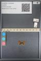 http://mczbase.mcz.harvard.edu/specimen_images/ent-lepidoptera/images/2014_01_09/IMG_153013.JPG