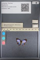 http://mczbase.mcz.harvard.edu/specimen_images/ent-lepidoptera/images/2014_01_09/IMG_153114.JPG