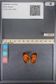 http://mczbase.mcz.harvard.edu/specimen_images/ent-lepidoptera/images/2014_01_09/IMG_153176.JPG