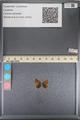 http://mczbase.mcz.harvard.edu/specimen_images/ent-lepidoptera/images/2014_01_10/IMG_153215.JPG