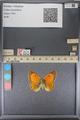 http://mczbase.mcz.harvard.edu/specimen_images/ent-lepidoptera/images/2014_01_16/IMG_153927.JPG
