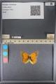 http://mczbase.mcz.harvard.edu/specimen_images/ent-lepidoptera/images/2014_01_16/IMG_153929.JPG