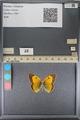 http://mczbase.mcz.harvard.edu/specimen_images/ent-lepidoptera/images/2014_01_16/IMG_153938.JPG