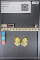 http://mczbase.mcz.harvard.edu/specimen_images/ent-lepidoptera/images/2014_01_16/IMG_153939.JPG