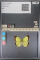http://mczbase.mcz.harvard.edu/specimen_images/ent-lepidoptera/images/2014_01_16/IMG_153941.JPG