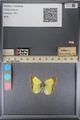 http://mczbase.mcz.harvard.edu/specimen_images/ent-lepidoptera/images/2014_01_16/IMG_153942.JPG