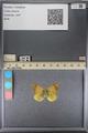 http://mczbase.mcz.harvard.edu/specimen_images/ent-lepidoptera/images/2014_01_16/IMG_153947.JPG