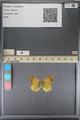 http://mczbase.mcz.harvard.edu/specimen_images/ent-lepidoptera/images/2014_01_16/IMG_153948.JPG