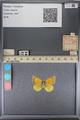 http://mczbase.mcz.harvard.edu/specimen_images/ent-lepidoptera/images/2014_01_16/IMG_153949.JPG
