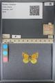 http://mczbase.mcz.harvard.edu/specimen_images/ent-lepidoptera/images/2014_01_16/IMG_153950.JPG
