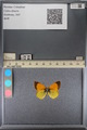 http://mczbase.mcz.harvard.edu/specimen_images/ent-lepidoptera/images/2014_01_16/IMG_153953.JPG