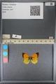 http://mczbase.mcz.harvard.edu/specimen_images/ent-lepidoptera/images/2014_01_16/IMG_153954.JPG