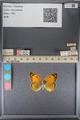 http://mczbase.mcz.harvard.edu/specimen_images/ent-lepidoptera/images/2014_01_16/IMG_153955.JPG