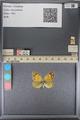 http://mczbase.mcz.harvard.edu/specimen_images/ent-lepidoptera/images/2014_01_16/IMG_153956.JPG