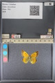 http://mczbase.mcz.harvard.edu/specimen_images/ent-lepidoptera/images/2014_01_16/IMG_153957.JPG