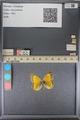 http://mczbase.mcz.harvard.edu/specimen_images/ent-lepidoptera/images/2014_01_16/IMG_153958.JPG
