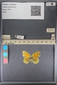 http://mczbase.mcz.harvard.edu/specimen_images/ent-lepidoptera/images/2014_01_16/IMG_153959.JPG