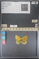 http://mczbase.mcz.harvard.edu/specimen_images/ent-lepidoptera/images/2014_01_16/IMG_153960.JPG