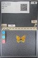 http://mczbase.mcz.harvard.edu/specimen_images/ent-lepidoptera/images/2014_01_16/IMG_153962.JPG