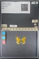 http://mczbase.mcz.harvard.edu/specimen_images/ent-lepidoptera/images/2014_01_16/IMG_153964.JPG