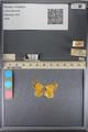 http://mczbase.mcz.harvard.edu/specimen_images/ent-lepidoptera/images/2014_01_16/IMG_153965.JPG