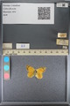 http://mczbase.mcz.harvard.edu/specimen_images/ent-lepidoptera/images/2014_01_16/IMG_153966.JPG